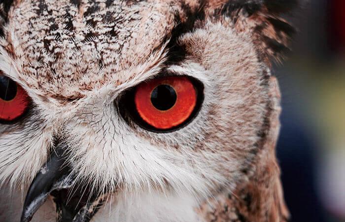 鋭い眼鏡で見つめるフクロウ